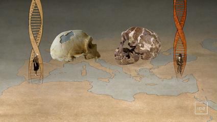 Genetique-neandertalweb